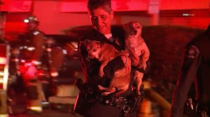 Two dogs are rescued from a fire in Monterey Park on Feb. 13, 2020. (Credit: RMG News)