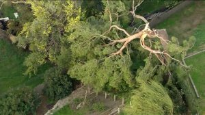 A tree toppled onto some power lines in Altadena on Feb. 10, 2020. (Credit: KTLA)